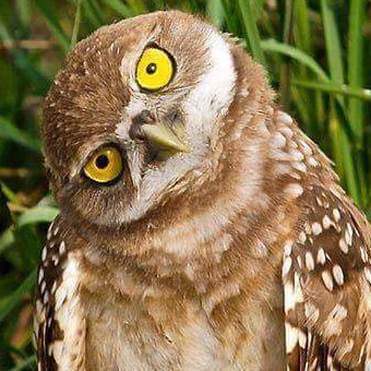 A wise owl, perplexed by tech